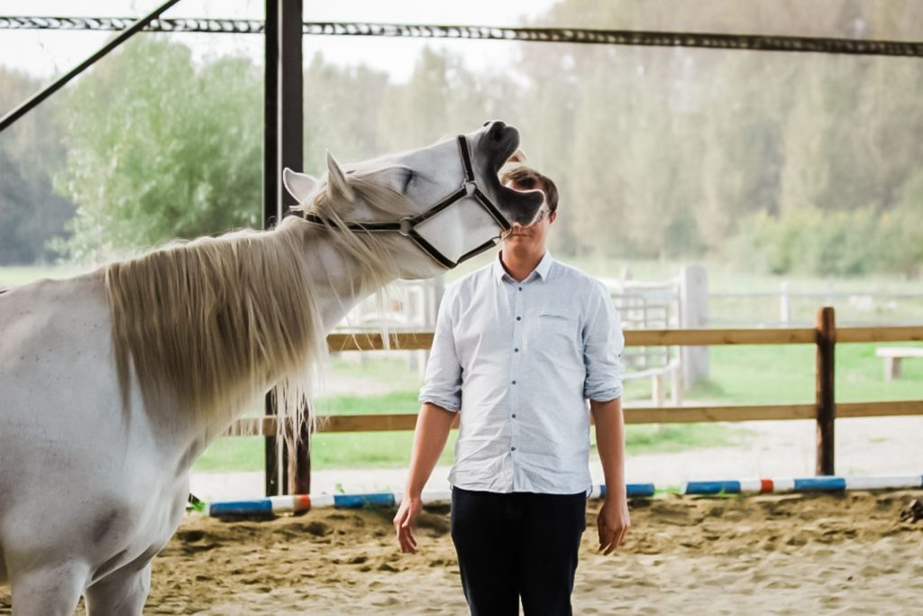 Kheiron | Equine Assisted Learning | Individuele begeleiding paarden met Cartujano paard