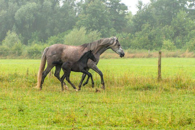 Kheiron | Equine Assisted Learning | Merrie en veulen