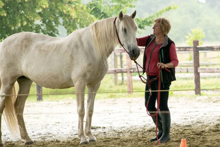 Kheiron | Equine Assisted Learning | Cartujano paard met Klara