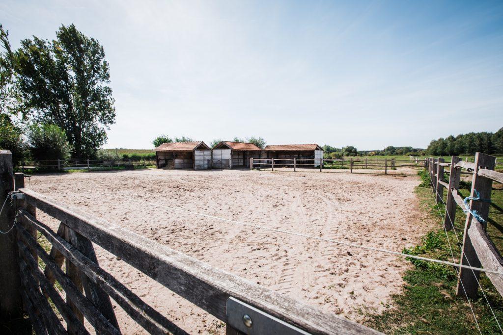 Kheiron | Equine Assisted Learning | Paardenwei Kasteelhoeve Wange