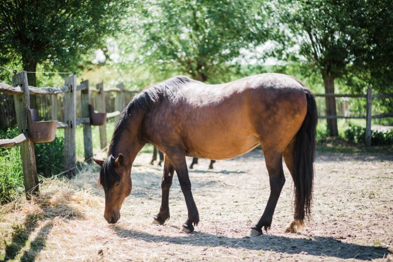 Kheiron | Equine Assisted Learning |