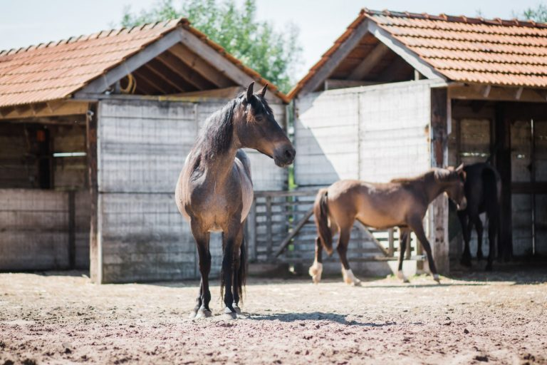Kheiron | Equine Assisted Learning | Peruaanse Paso's