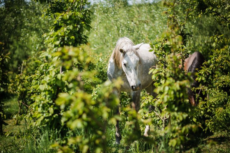 Kheiron | Equine Assisted Learning | Cartujano in bosjes
