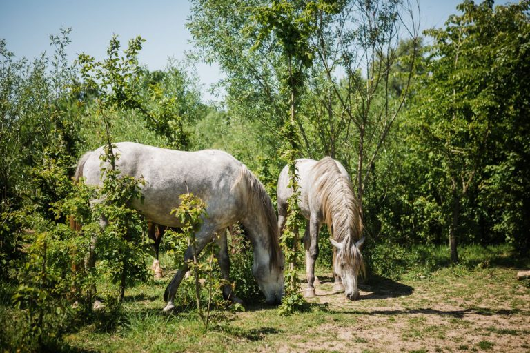 Kheiron | Equine Assisted Learning | Cartujano's in bosjes