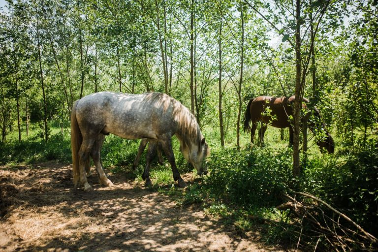 Kheiron | Equine Assisted Learning | Cartujano en Peruaanse Paso in bosjes