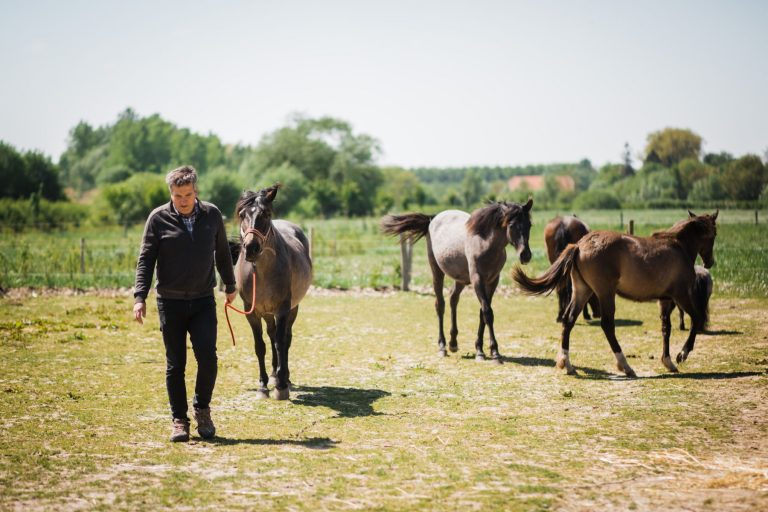 Kheiron | Equine Assisted Learning | Philip met Peruaanse Paso's