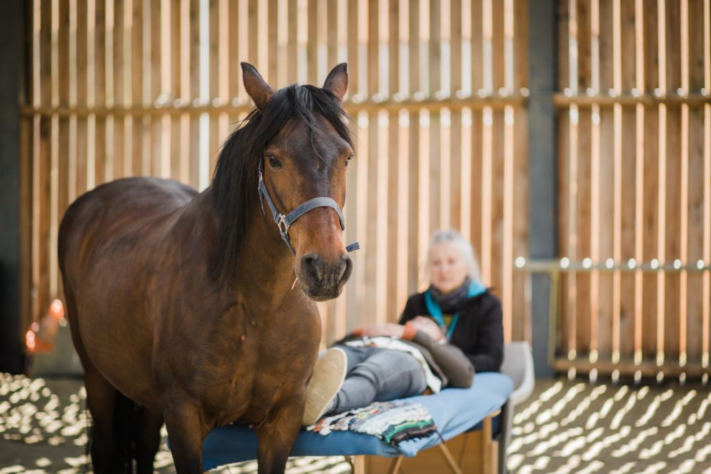 Kheiron   Equine Assisted Learning   Klara osteopathie paarden